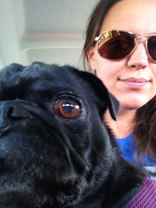 Quaid, a black pug, sitting on Lindsay's lap