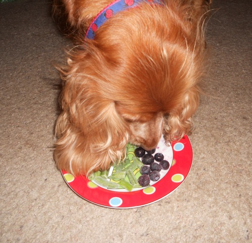 dog eating green beans and blueberries